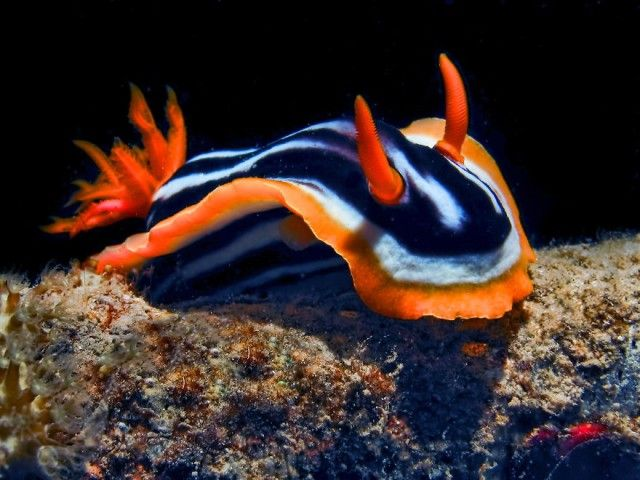 weird-sea-slug-photography-1__880_e