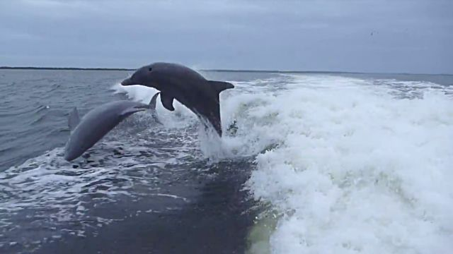 dolphincollision0