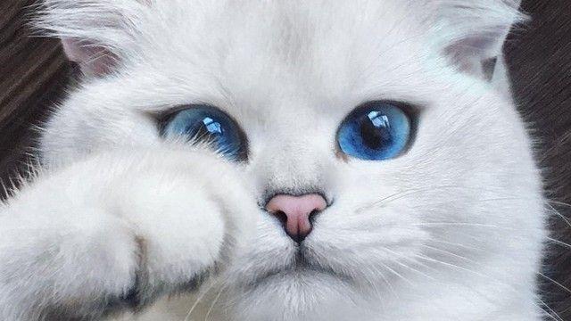 cat-1_e0