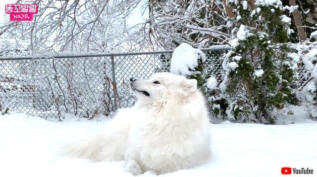 snowfield6_640