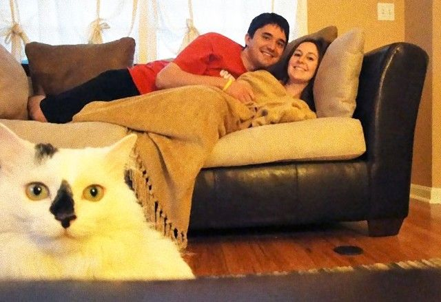 funny-cat-photobombs-12-58e23b18b6a18__605_e