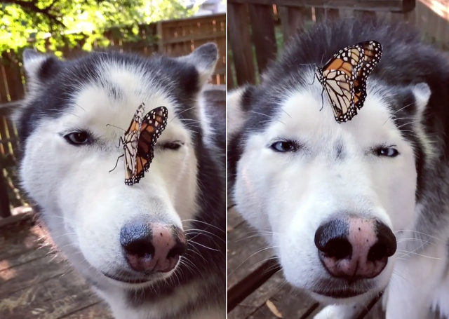 dog-butterfly-encounter