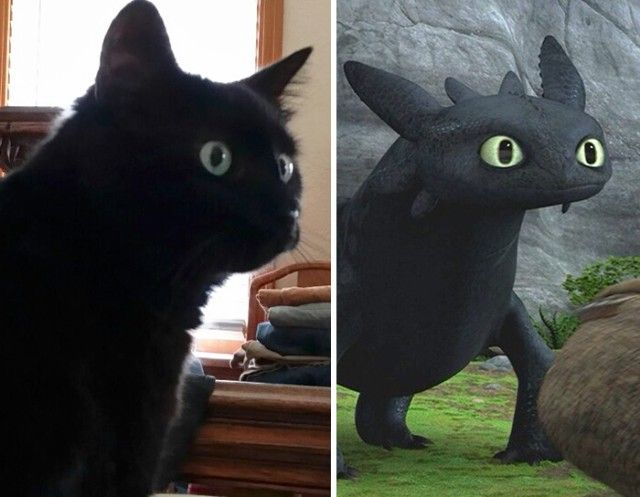 cats-toothless-lookalikes-35-57cec61c00b9c__700_e