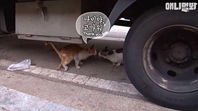 bodyguardcat7