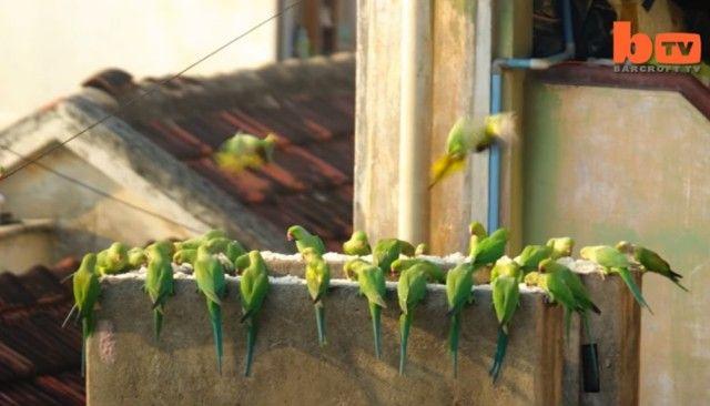 birdman7_e