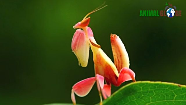 prayingmantis15