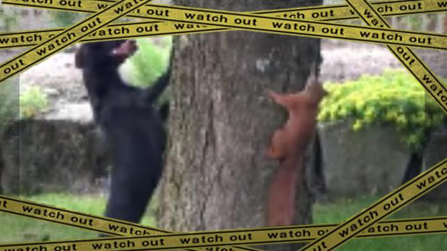 squirrel 2 [www-frame