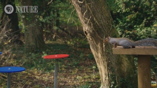 squirrelobstaclecourse2_e
