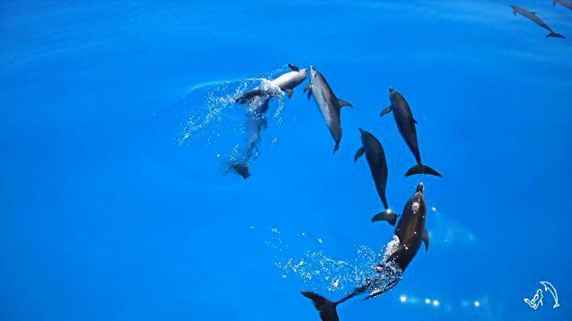 dolphininvitation3_e