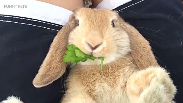 cuterabbits3