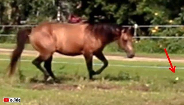 horsenbutterfly0_640