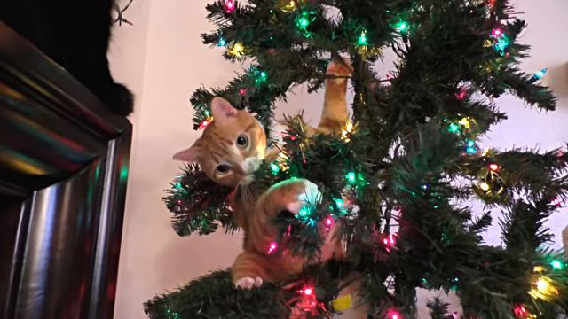 catsntrees15