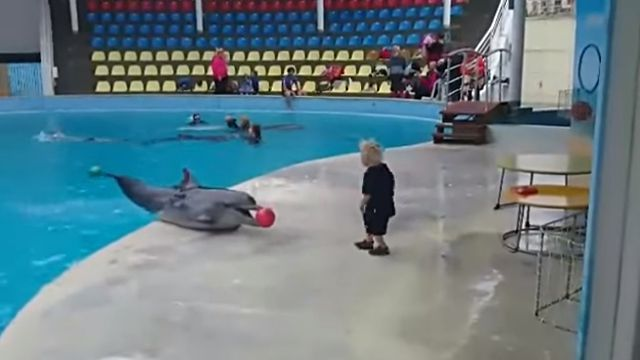 dolphinwithkid1