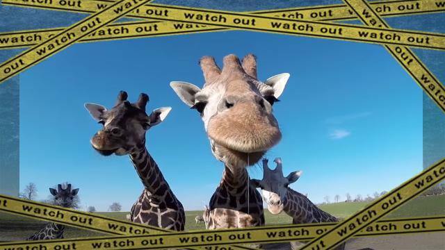 giraffe-3 [www-frame