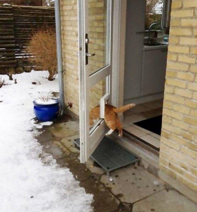 funny-idiot-cats-29-5ae0425dcd815__605_e