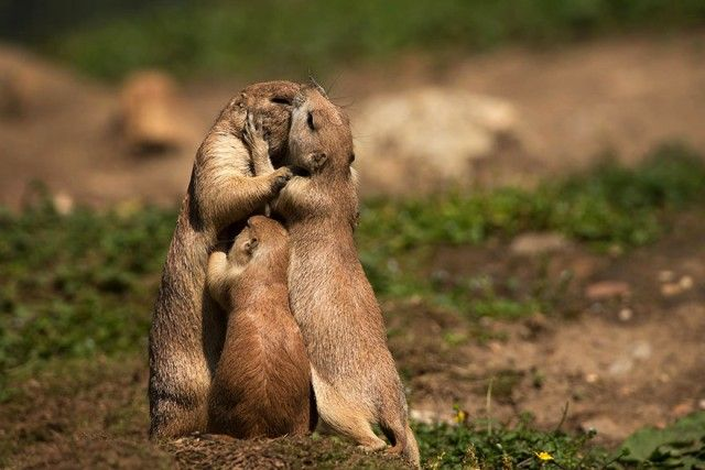 cute-kissing-animals-love-4__880_e