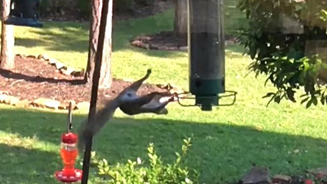 squirrelnfeeder0_e