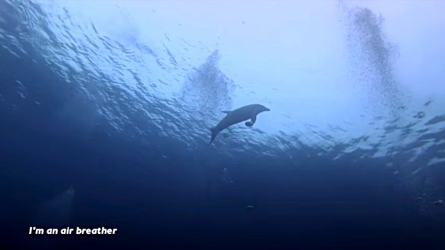 dolphinshark1