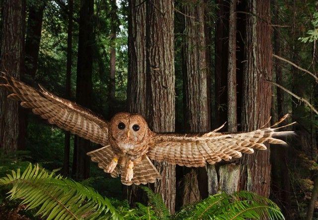 owl-photography-29__880_e