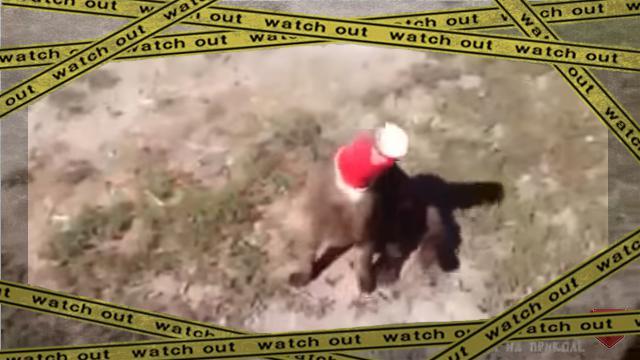 cupcat-frame [www-frame