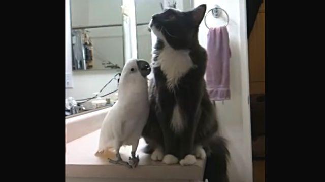 catnbird2