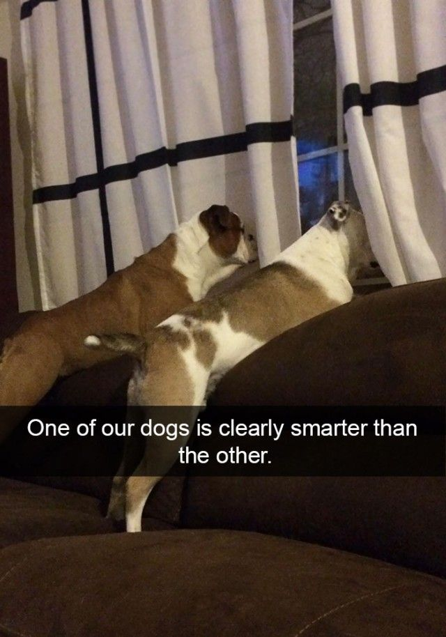 hilarious-dog-snapchats1_e