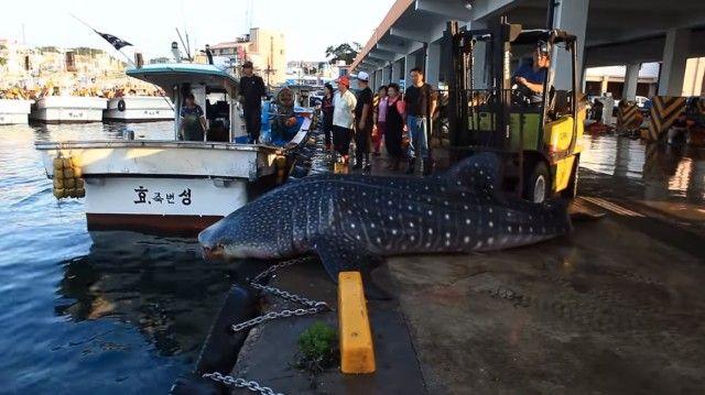 whalesharkinkorea2_e