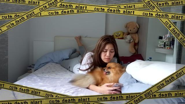 puppy-f [www-frame
