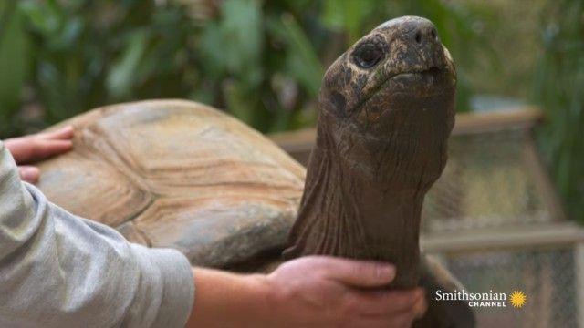 tortoises5_e