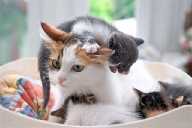 cats7ok
