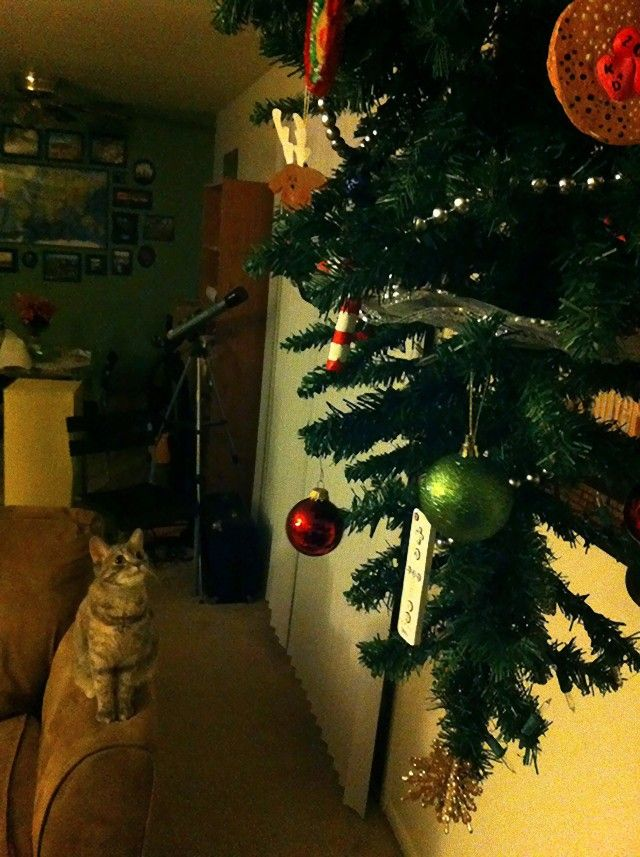 protecting-christmas-tree-from-dogs-cats-pets-7e