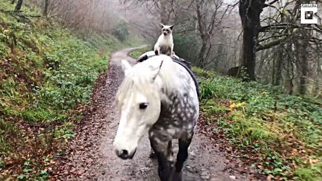 horseridingcat0