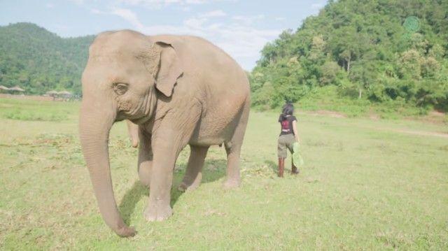 elephantsnbicycle6_e