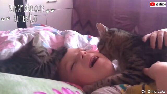 catsloveowners4_640
