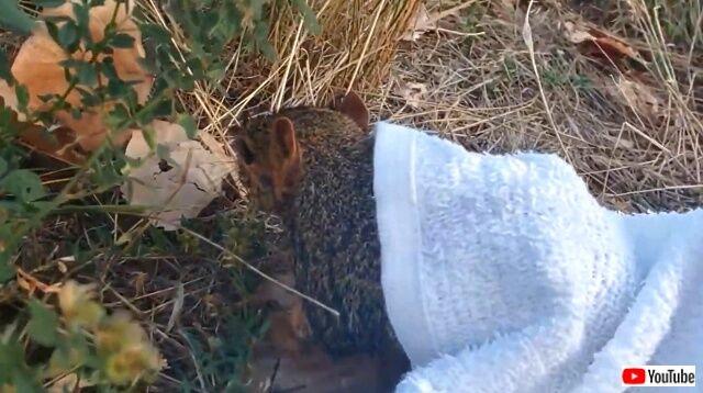 rescuessquirrel3_640