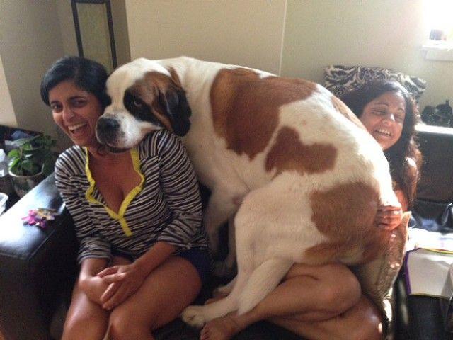big-puppy10_e
