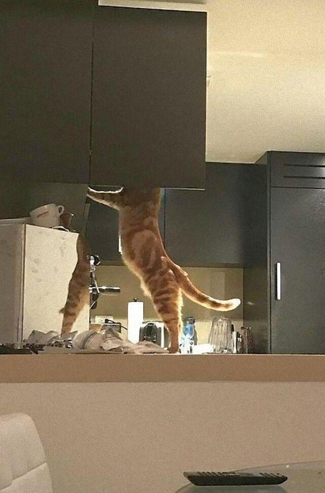 cat (2)_e