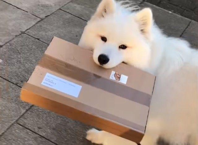 deliverygirl1_e