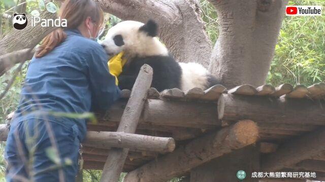 panda2_640