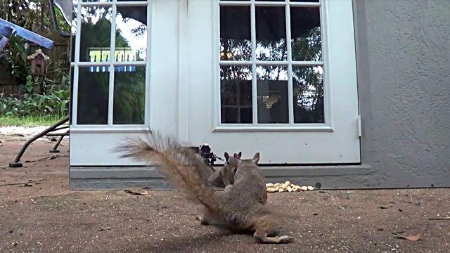 squirrelsvsmirror1