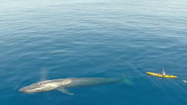 swimmingwwhales5