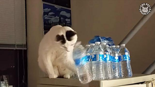 adorablecats12