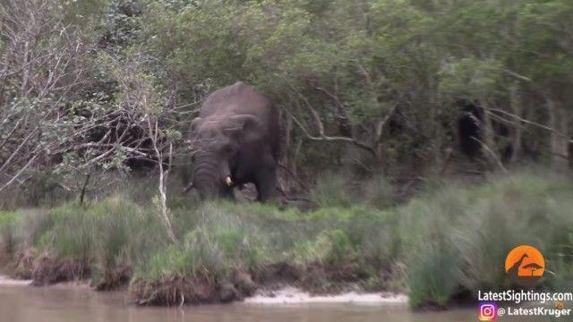 elephantnhippos1_e