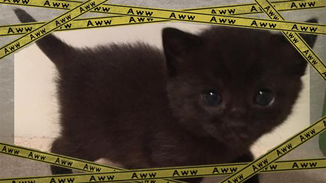 cat-8_e-frame