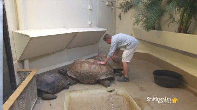 tortoises2_e