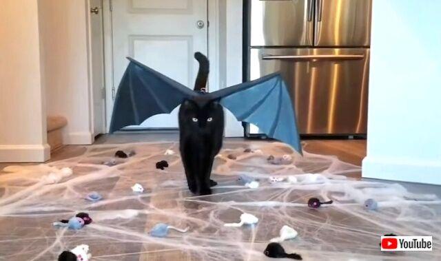 blackcats8_640