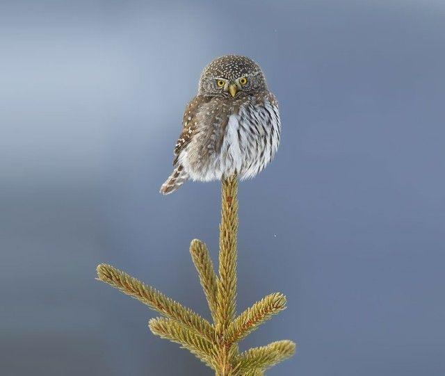 owl-photography-32__880_e