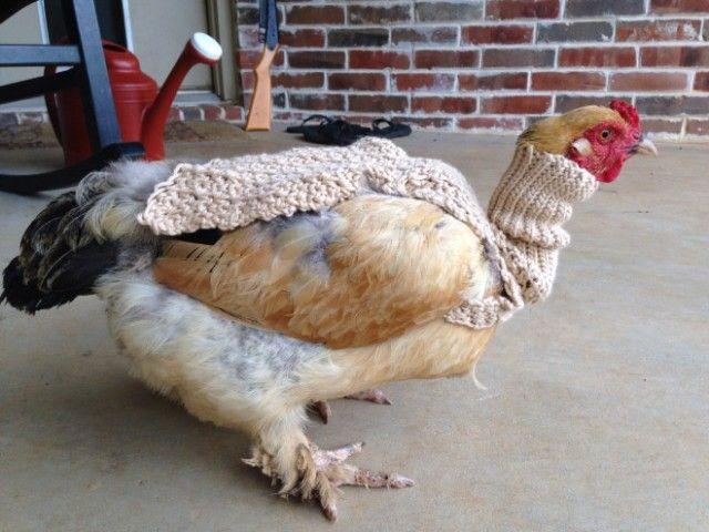 chick7_e