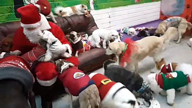santadogs5