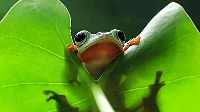 frog-photography-tantoYensen-21-5836fb8ff0438__880_ea